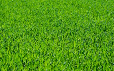 Reduce Incurring Costs with Artificial Grass